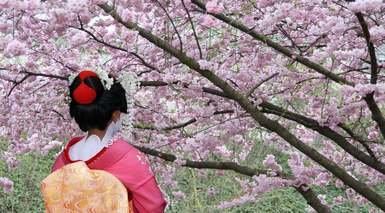 Japón Tradicional con 9 Visitas