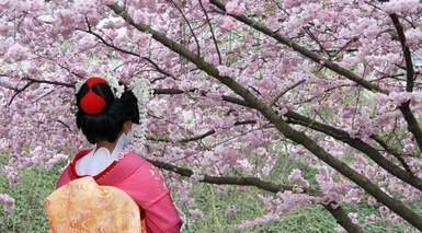 Japón Tradicional + Tren Bala + 8 Visitas