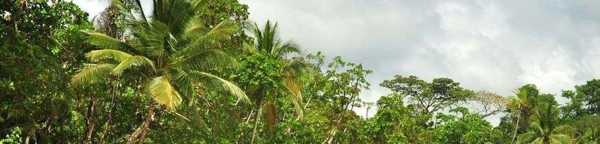 Costa Rica Básica, Tortuguero y Playa Manuel Antonio en 4x4